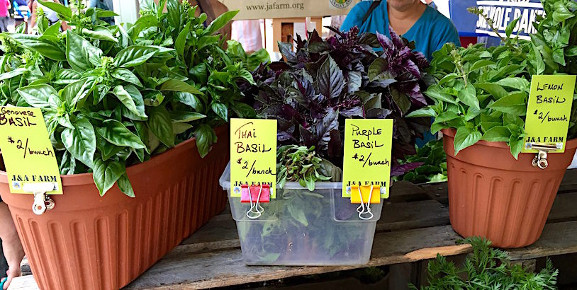 4 varieties of basil at J&A Farm