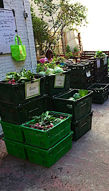 Produce in bins to be picked up by members