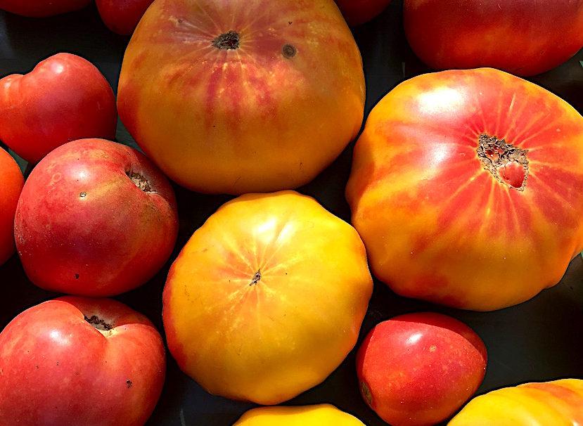Bradley Farm heirloom tomatoes